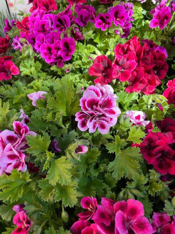 floristeria andorra