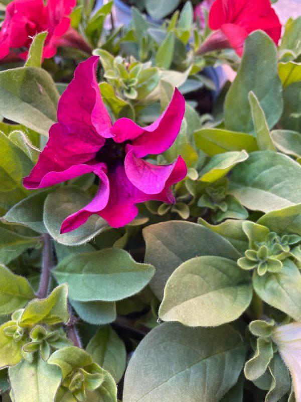 flors plantes estiu andorra