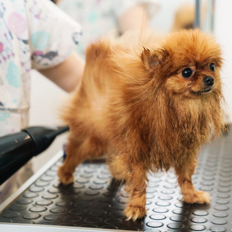 peluqueria canina andorra